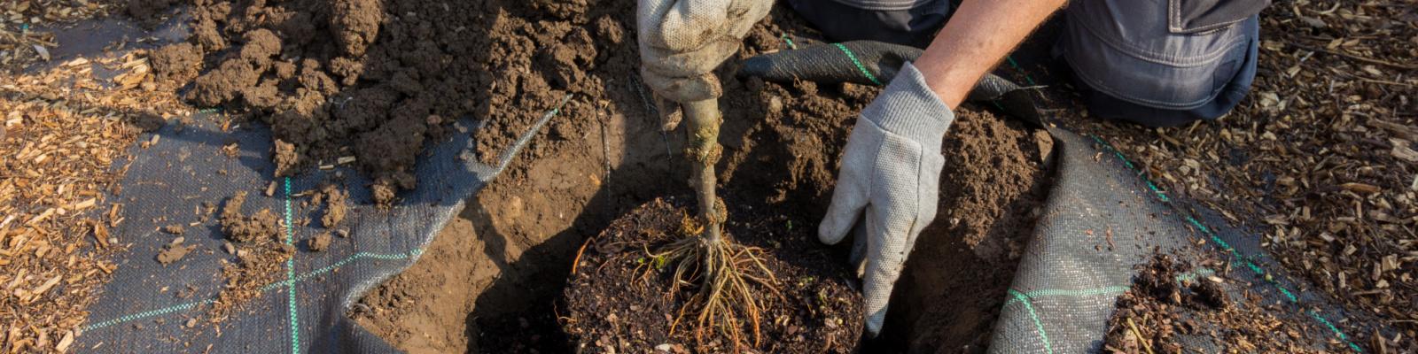 Bomen en/of struiken planten